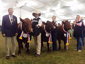 2015 Royal Adelaide Show S Kidman and Co Interbreed Sire's Progeny Group