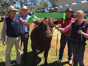 Bundaleer Monash M58, Grand Champion Bull, 2017 Jamestown Show
